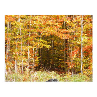 Path In The Woods Adirondacks Mountains Post Card