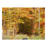 Path In The Woods Adirondacks Mountains Poster