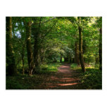 Path in the Woods Postcards