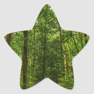 Path in the Woods Star Sticker