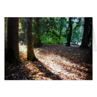 Path in the Woods Sunshine and Shadows Card