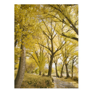 Path in woods, Sugarhouse Park, Salt Lake City Postcard