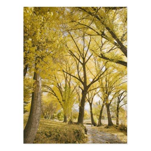 Path in woods, Sugarhouse Park, Salt Lake City Postcards