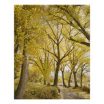 Path in woods, Sugarhouse Park, Salt Lake City Print