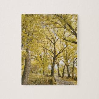 Path in woods, Sugarhouse Park, Salt Lake City Puzzle