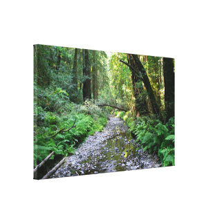 """Path of Ferns"", Muir Woods Canvas Print"