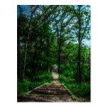 Path Of Life Postcard