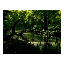 Path of Peacefulness Postcard