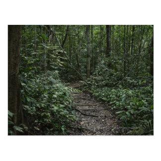 Path, Taman Negara National Park, Pahang, 2 Postcard