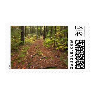 Path through a forest postage stamps