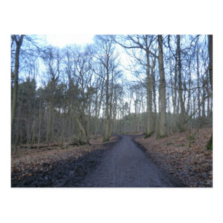 Path Through Delamere Forest in Cheshire Postcard