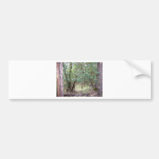 Path Through the Forest Bumper Sticker