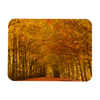 Path through the forest in autumn rectangle magnet