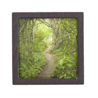 Path through the forest jewelry box