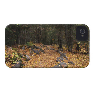 Path Through the Forest; No Text iPhone 4 Case-Mate Case