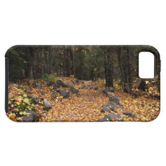 Path Through the Forest; No Text iPhone SE/5/5s Case