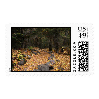 Path Through the Forest; No Text Stamps