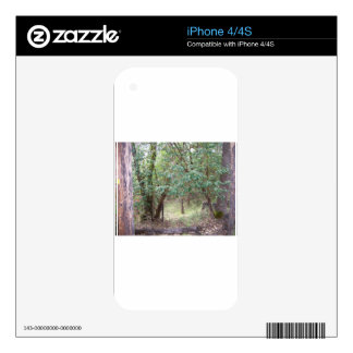 Path Through the Forest iPhone 4 Skins