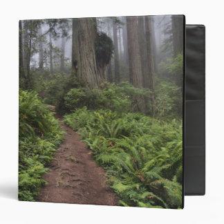 Path through the giant redwood trees shrouded 2 vinyl binders