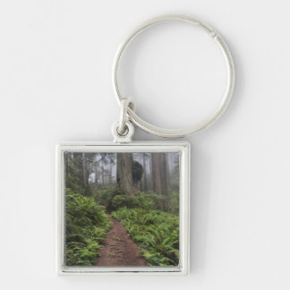 Path through the giant redwood trees shrouded 2 keychain