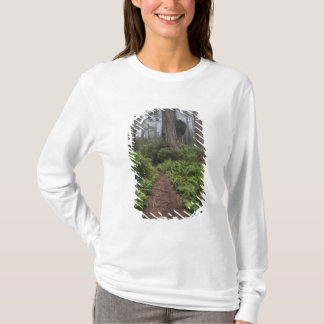 Path through the giant redwood trees shrouded 2 T-Shirt