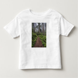 Path through the giant redwood trees shrouded 2 toddler t-shirt