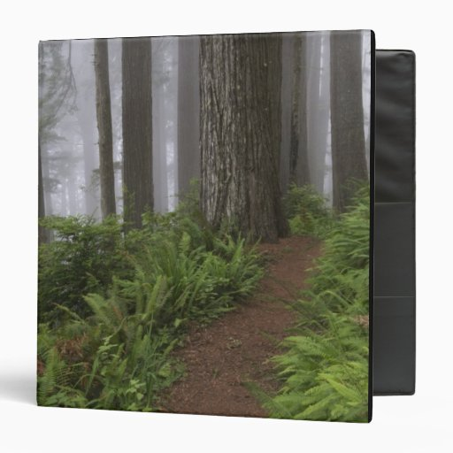 Path through the giant redwood trees shrouded 3 ring binders
