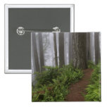 Path through the giant redwood trees shrouded button