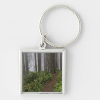 Path through the giant redwood trees shrouded keychain