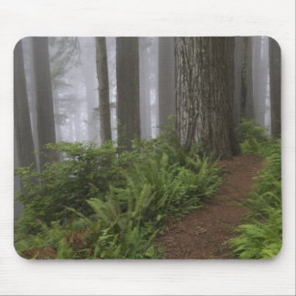 Path through the giant redwood trees shrouded mouse pad