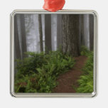 Path through the giant redwood trees shrouded christmas ornament