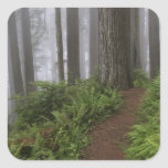 Path through the giant redwood trees shrouded stickers