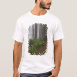 Path through the giant redwood trees shrouded T-Shirt