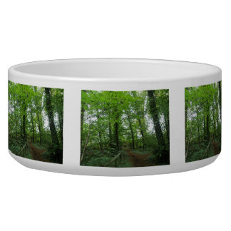 Path through the Green Forest Dog Bowl