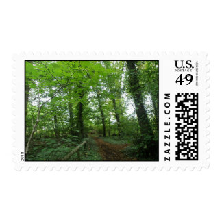 Path through the Green Forest Postage Stamps