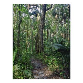 Path Through The Oaks. Highlands Hammock S.P., Fl. Photographic Print