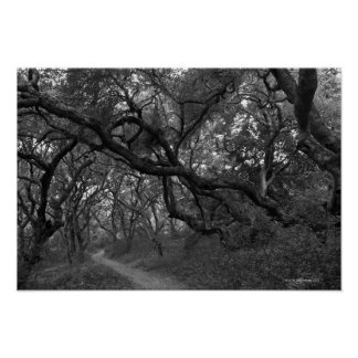 Path thru oak tree grove in Andrew Molera State Poster