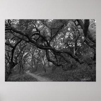 Path thru oak tree grove in Andrew Molera State Poster