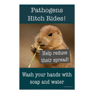 Pathogens hitch rides. Safety hand-washing poster
