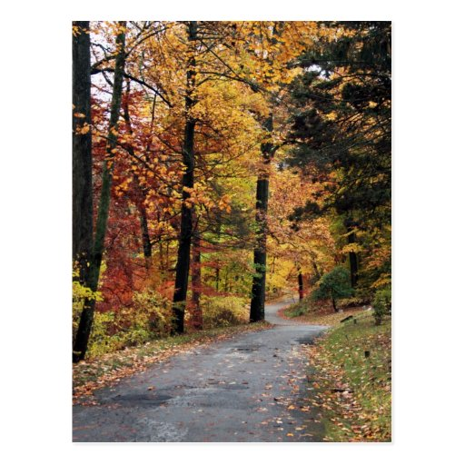 Paths Postcard