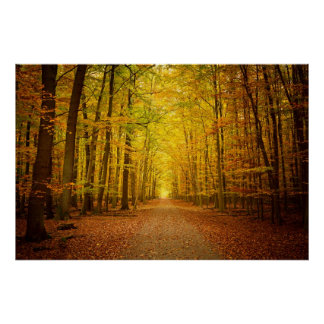 Pathway in the autumn forest poster