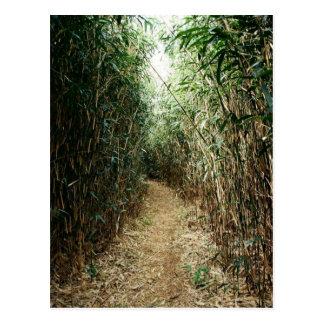 Pathway through stalks postcard