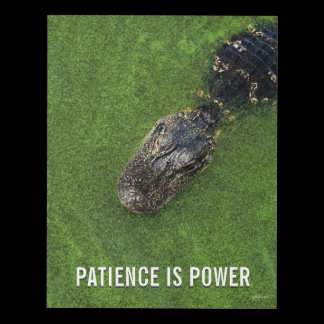 Patience is Power • Alligator • Florida Nature Panel Wall Art