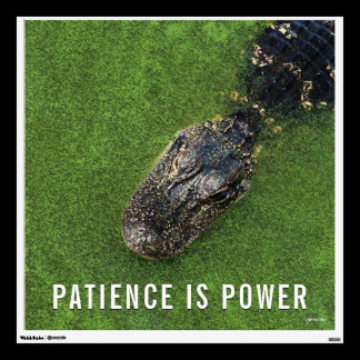 Patience is Power • Alligator • Florida Nature Wall Sticker