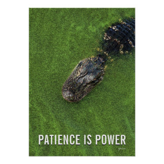 Patience is Power • Florida Alligator Photo • Poster