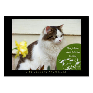 Patience Life Lessons From A Cat ACEO Art Cards Business Card Template