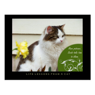 Patience Life Lessons From A Cat Postcard