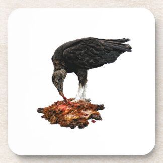 Patience Pays... Scavenger Eating Road Kill! Coaster