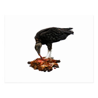 Patience Pays... Scavenger Eating Road Kill! Post Card