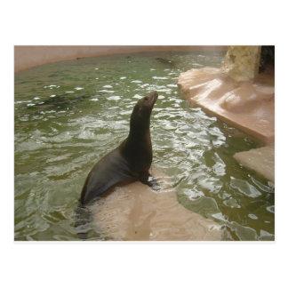 Patient Seal Postcard
